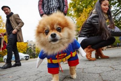 TSP_Dog_Parade_11